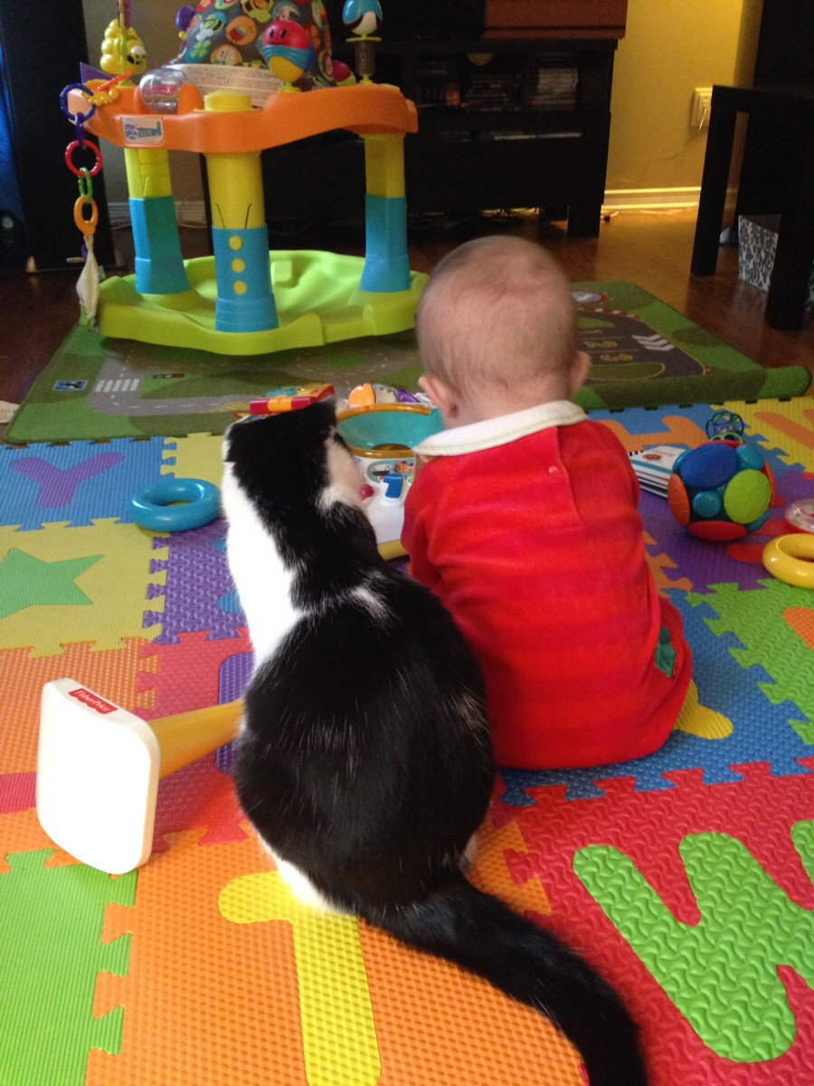 My cat rarely leaves my son's side - Imgur